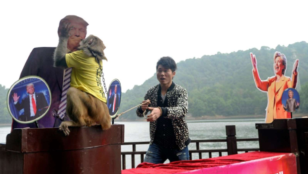 next american president elections are being most intersting news. the chinese monkey fortune teller had selected the trump photo as the next us president