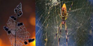 spider our life changing story