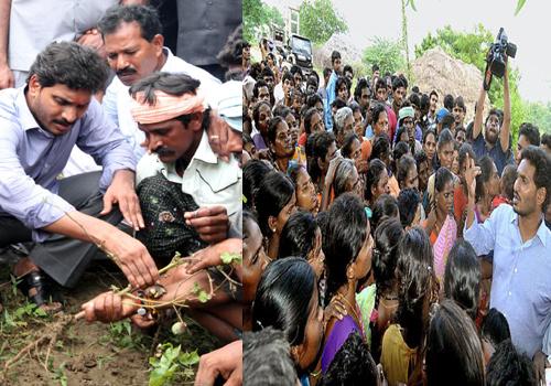 jagan said justice flood affected farmers