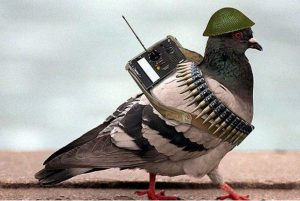 pak pigeon battle