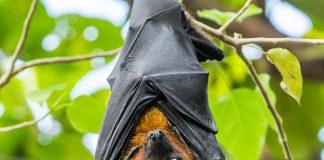 bat secrets