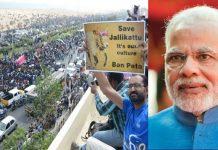 tamil nadu people achieve modi govt clears tamil nadu govt ordinance on jallikattu