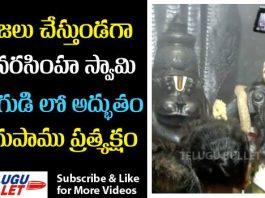Snake On Narasimha Swamy Idle