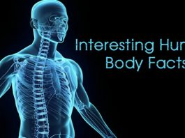 Fascinating things about our Human Body