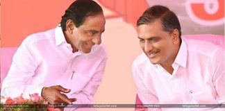 Harish Rao Taking Care Of KCR's Constituency