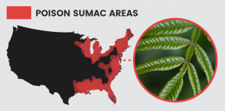 5 Natural Ways to Prevent & Treat Poison Sumac