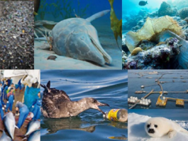 Facts that Prove that Humans are Killing Oceans
